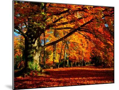 The Tree-Philippe Sainte-Laudy-Mounted Photographic Print
