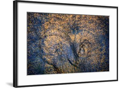 The Trees Have Eyes-Ursula Abresch-Framed Photographic Print