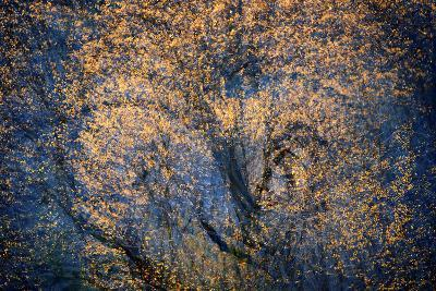 The Trees Have Eyes-Ursula Abresch-Photographic Print
