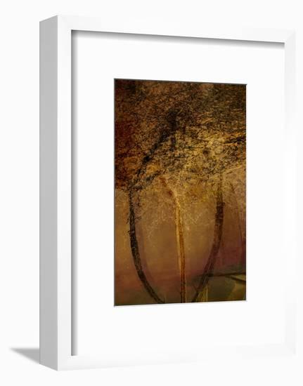 The Trees of Life II-Doug Chinnery-Framed Photographic Print