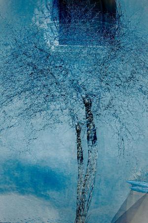 https://imgc.artprintimages.com/img/print/the-trees-of-life-iii_u-l-q1gvkrh0.jpg?p=0