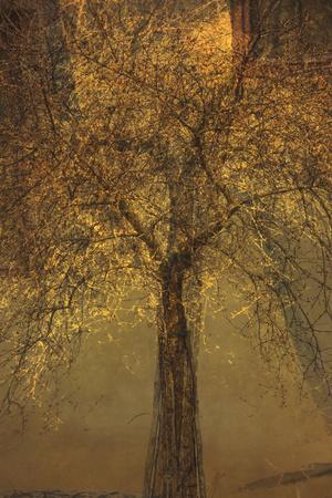 https://imgc.artprintimages.com/img/print/the-trees-of-life-vi_u-l-q1gvkiz0.jpg?artPerspective=n