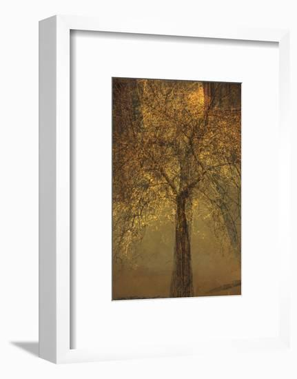The Trees of Life VI-Doug Chinnery-Framed Photographic Print