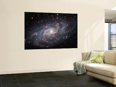 The Triangulum Galaxy--Wall Mural