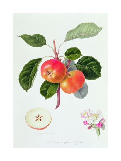 The Trumpington Apple, 1819-William Hooker-Giclee Print
