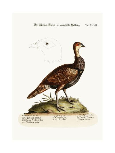 The Turkey-Pheasant, a Mixed Species, 1749-73-George Edwards-Giclee Print