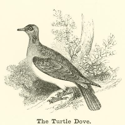 The Turtle Dove--Giclee Print