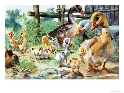 The Ugly Duckling--Giclee Print