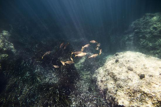The underwater scenery all around the Mediterranean island of Formentera,-Nadja Jacke-Photographic Print
