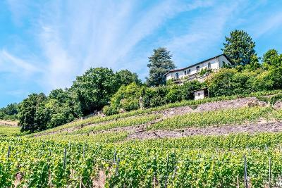 The UNESCO World Heritage Site of the Lavaux Vineyards near Lausanne in Switzerland.- albinhillert-Photographic Print