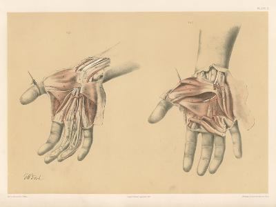 The Upper Limb. Superficial and Deep Views of the Palm of the Hand-G. H. Ford-Giclee Print