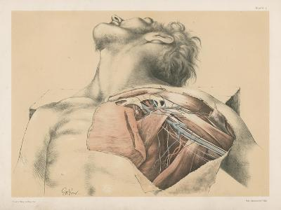 The Upper Limb. The Axillary Vessels, and the Brachial Plexus of Nerves, with their Branches-G. H. Ford-Giclee Print