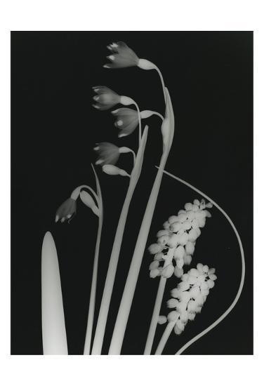 The Valley-Albert Koetsier-Art Print