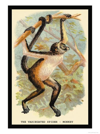 The Variegated Spider-Monkey-G.r. Waterhouse-Art Print