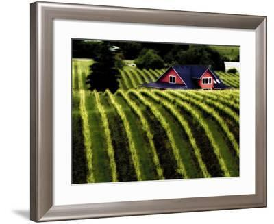 The Vineyards of Dundee Hills, Wine Country, Oregon, Usa-Richard Duval-Framed Photographic Print