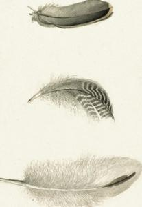 A Trio of Feathers by The Vintage Collection