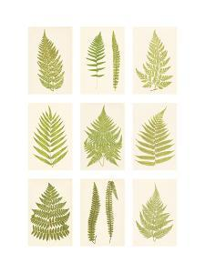 Fernery by The Vintage Collection