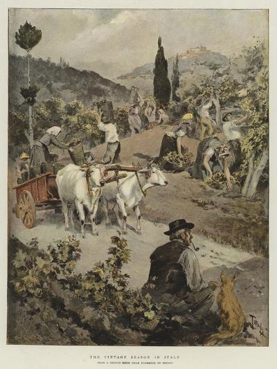The Vintage Season in Italy-Oswaldo Tofani-Giclee Print
