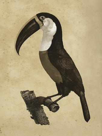 https://imgc.artprintimages.com/img/print/the-vintage-toucan-ii_u-l-f885sj0.jpg?p=0