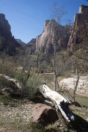 The Virgin River Running Through Zion Canyon National Park, Utah, Usa-Natalie Tepper-Photo