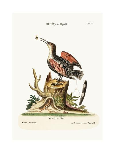 The Wall-Creeper, or Spider-Catcher, 1749-73-George Edwards-Giclee Print