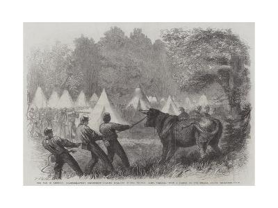 The War in America, Quartermaster's Department, Killing Bullocks in the Federal Camp, Virginia-Frederick John Skill-Giclee Print