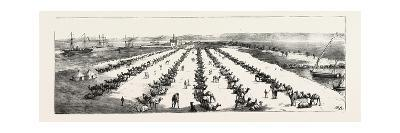 The War in the Soudan (Sudan): the Camel Depot at Suez--Giclee Print