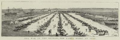 The War in the Soudan, the Camel Depot at Suez--Giclee Print