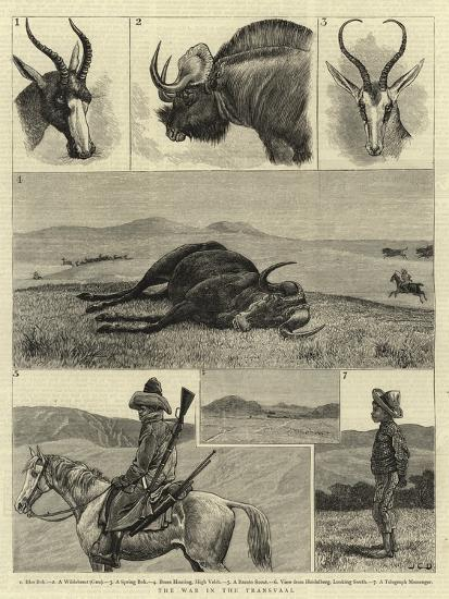 The War in the Transvaal--Giclee Print