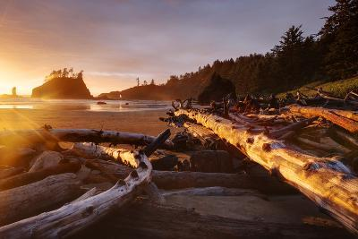 The Warm Light Of Fading Day Lights Up The Wood Left On Second Beach In Olympic NP, Washington-Jay Goodrich-Photographic Print