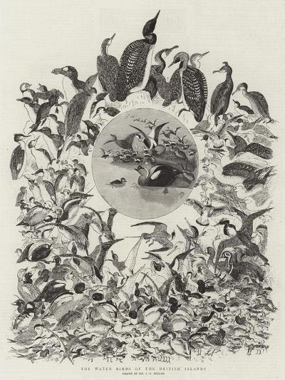 The Water Birds of the British Islands-John Everett Millais-Giclee Print