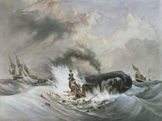 The Whale, 1836-Jean Francois Garneray-Giclee Print
