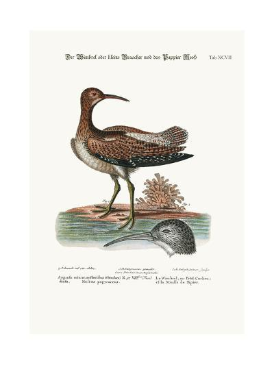 The Whimbrel, or Lesser Curlew, and the Paper-Moss, 1749-73-George Edwards-Giclee Print