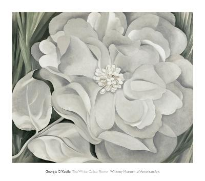 The White Calico Flower, c.1931-Georgia O'Keeffe-Art Print