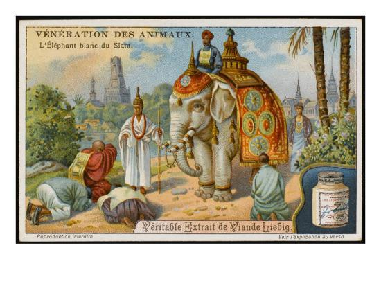 The White Elephant Is Sacred in Siam/Thailand--Giclee Print