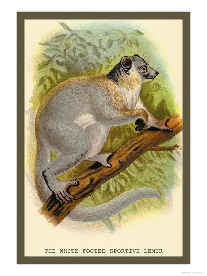 The White-Footed Sportive Lemur-Sir William Jardine-Art Print