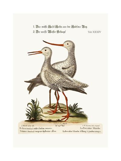 The White Godwit from Hudson's Bay. the White Red-Shank or Pool-Snipe, 1749-73-George Edwards-Giclee Print