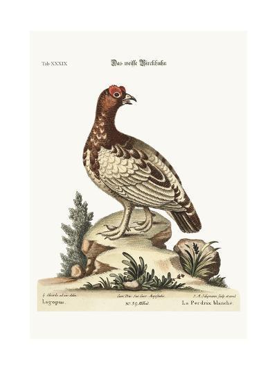 The White Partridge, 1749-73-George Edwards-Giclee Print