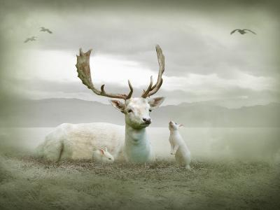 The White Stag-Lynne Davies-Photographic Print