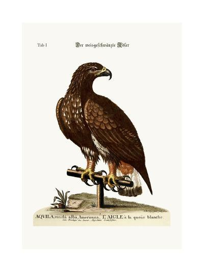 The White-Tailed Eagle, 1749-73-George Edwards-Giclee Print