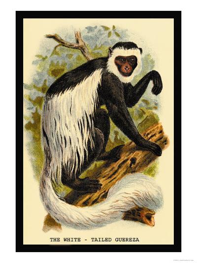 The White-Tailed Guereza-G.r. Waterhouse-Art Print