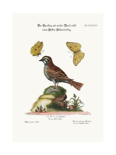 The White-Throated Sparrow, and the Yellow Butterfly, 1749-73-George Edwards-Giclee Print