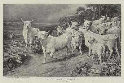 The Wild Cattle of Chillingham-Basil Bradley-Giclee Print