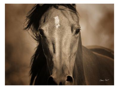 The Wild One-Barry Hart-Premium Photographic Print