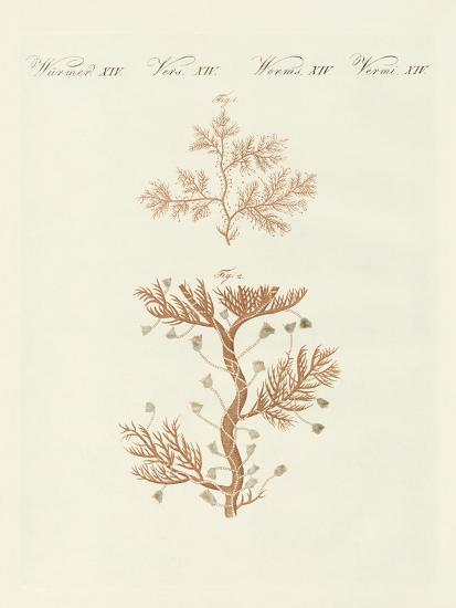 The Winding Sertularia or Base Coralline--Giclee Print