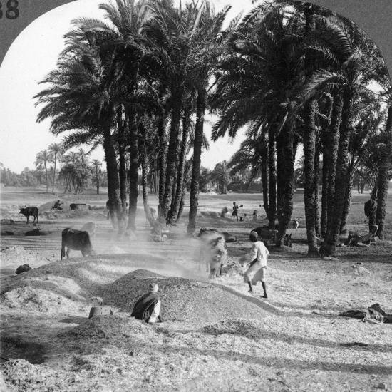 The Winnowing of the Grain after Threshing, Egypt, 1905-Underwood & Underwood-Photographic Print