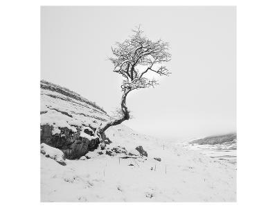 The Winter Tree--Art Print