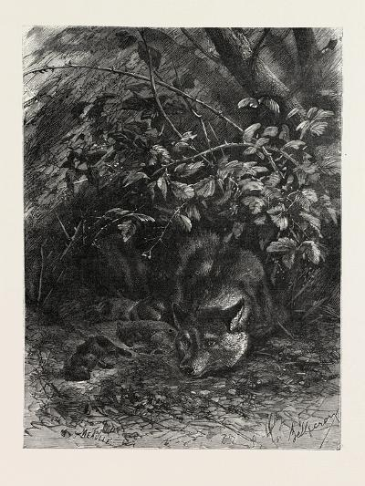 The Wolf in its Lair, 1882--Giclee Print
