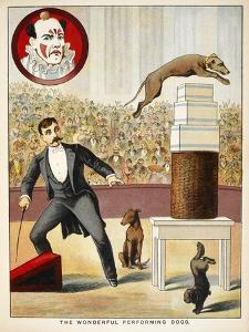 The Wonderful Performing Dogs'. an Act Involving Dogs in a Circus Ring