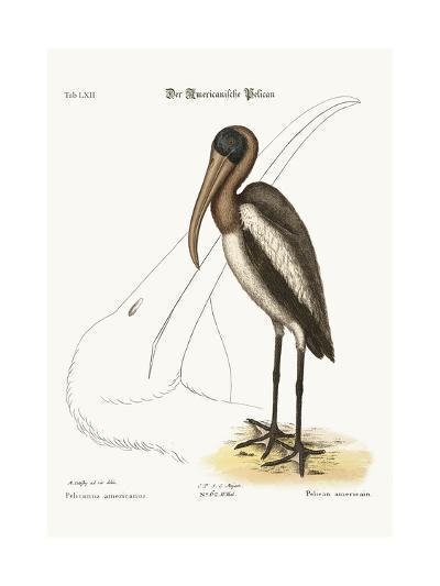 The Wood Pelican, 1749-73-Mark Catesby-Giclee Print